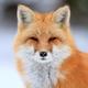Аватар пользователя FoxFast