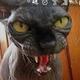Аватар пользователя Fixus