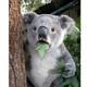 Аватар пользователя asdag42