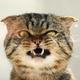 Аватар пользователя BRITISHCAT