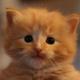 Аватар пользователя Kudryun