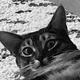 Аватар пользователя lipfroy