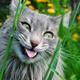 Аватар пользователя Yigrik