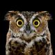 Аватар пользователя DaffyPanda
