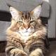 Аватар пользователя darvin44in