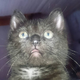 Аватар пользователя MafkaKakafka