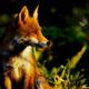Аватар пользователя fox1812