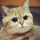 Аватар пользователя Mrs.AnnaMeow