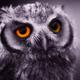 Аватар пользователя EVARI