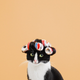 Аватар пользователя iDeep