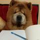 Аватар пользователя Yulak