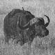 Аватар пользователя buffaloboom