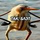 Аватар пользователя MrArtist