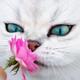 Аватар пользователя WaterFoxUS