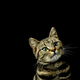 Аватар пользователя dalshevskiy