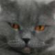 Аватар пользователя MRAKOBESAMNET