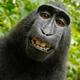 Аватар пользователя Karabasraskolbas