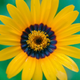 Аватар пользователя minarus