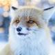 Аватар пользователя Raricy