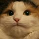 Аватар пользователя DemoDimon