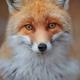 Аватар пользователя Ivian