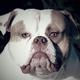 Аватар пользователя BullDog