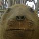 Аватар пользователя Ugugushich