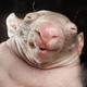 Аватар пользователя krutko
