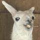 Аватар пользователя coollisions