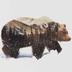 Bear91