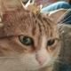 Аватар пользователя IreneVesel