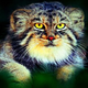 Аватар пользователя ruru3