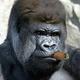 Аватар пользователя VladSerb