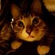 Аватар пользователя Ovann3000