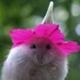 Аватар пользователя HomkaPlyushkin
