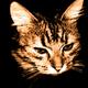 Аватар пользователя vasiliymihalych