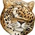 mrrrLeopard