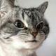 Аватар пользователя titotiito