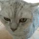Аватар пользователя AvgustKlark