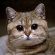 Аватар пользователя DoctorBrick