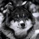 Аватар пользователя Soldiner