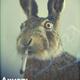 Аватар пользователя CountDeGis