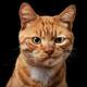Аватар пользователя proSHproT