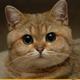 Аватар пользователя IknowYourMom2