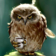 Аватар пользователя Xeim
