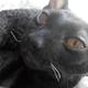Аватар пользователя Yanytch