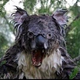 Аватар пользователя LinuxFest