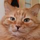 Аватар пользователя Natky