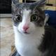 Аватар пользователя KOTBEPHUCMETAHY