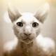 Аватар пользователя vexel82